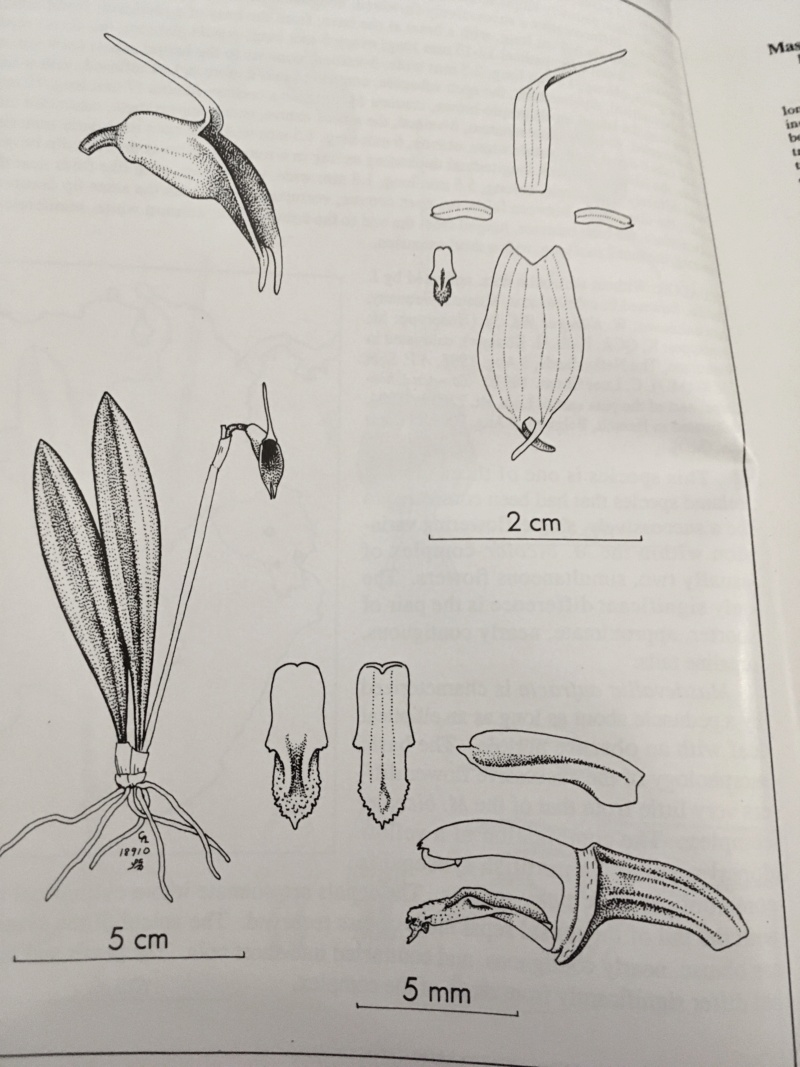Miniatur-Orchideen Teil 6 - Seite 15 67c9b210