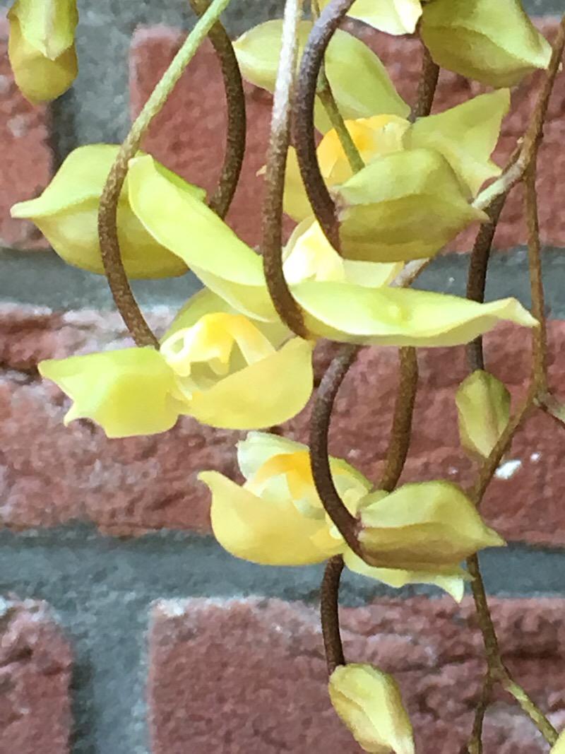 Orchideen-Neuzugang 2 - Seite 21 6d6d4310