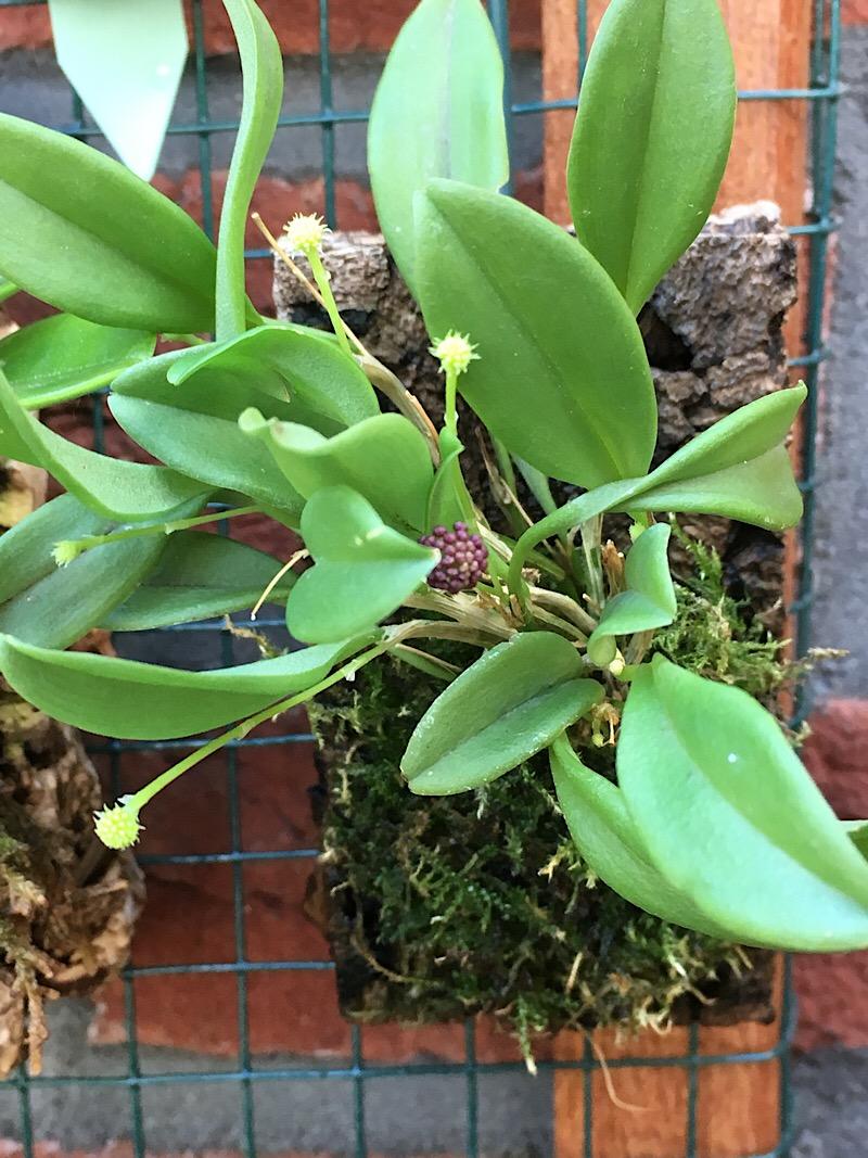 Orchideen-Neuzugang 2 - Seite 21 F5120f10