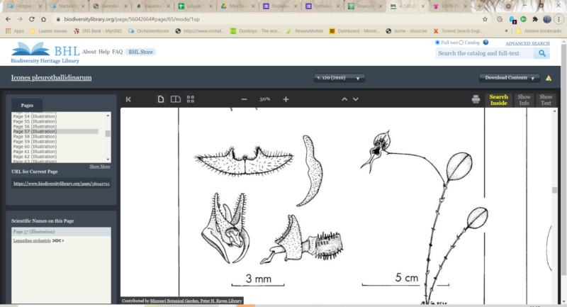 Makroaufnahmen von Miniaturorchideen - Seite 2 Scherm19