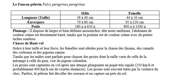 Bureau des fauconniers - Page 2 Faucon10