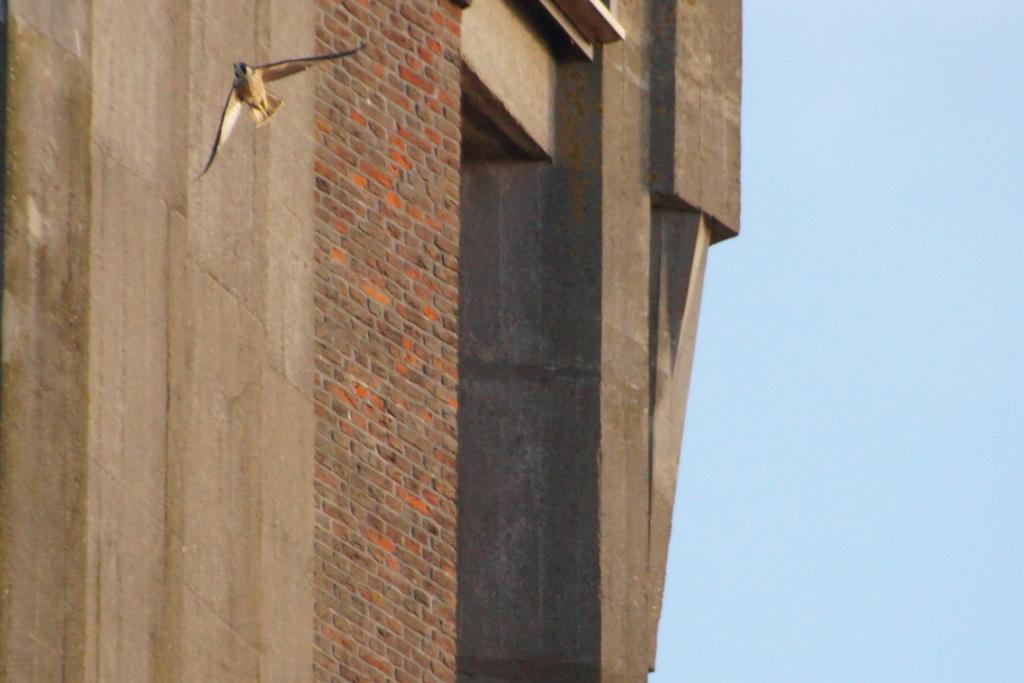 Aalsmeer/Watertoren. Youngster en Sidonia - Pagina 17 00110