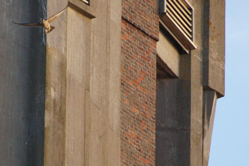 Aalsmeer/Watertoren. Youngster en Sidonia - Pagina 17 00211