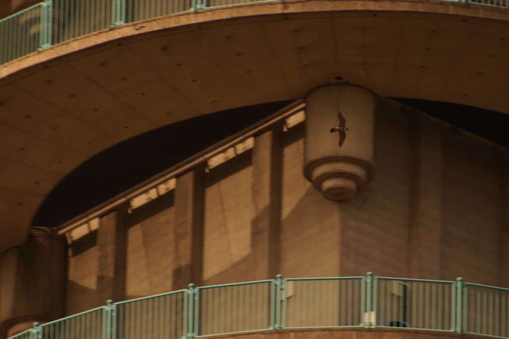 Rond om de toren - Pagina 5 00816