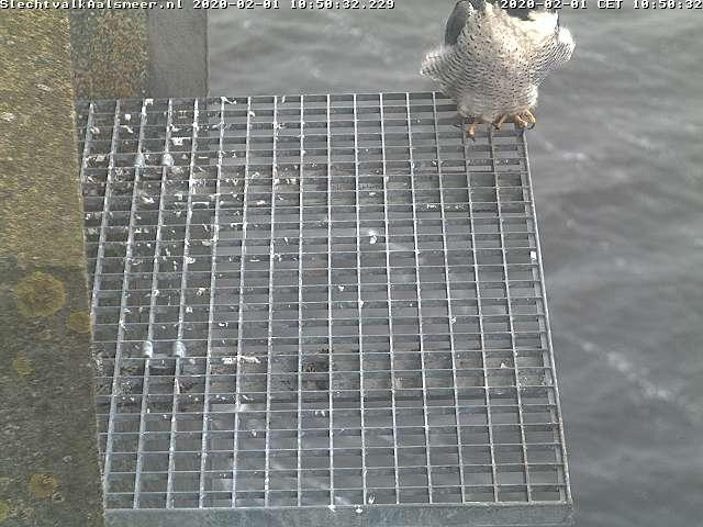 Aalsmeer/Watertoren. Youngster en Sidonia - Pagina 7 0102a10