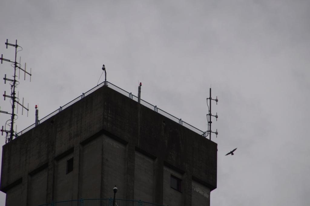 Rond om de toren - Pagina 11 01415