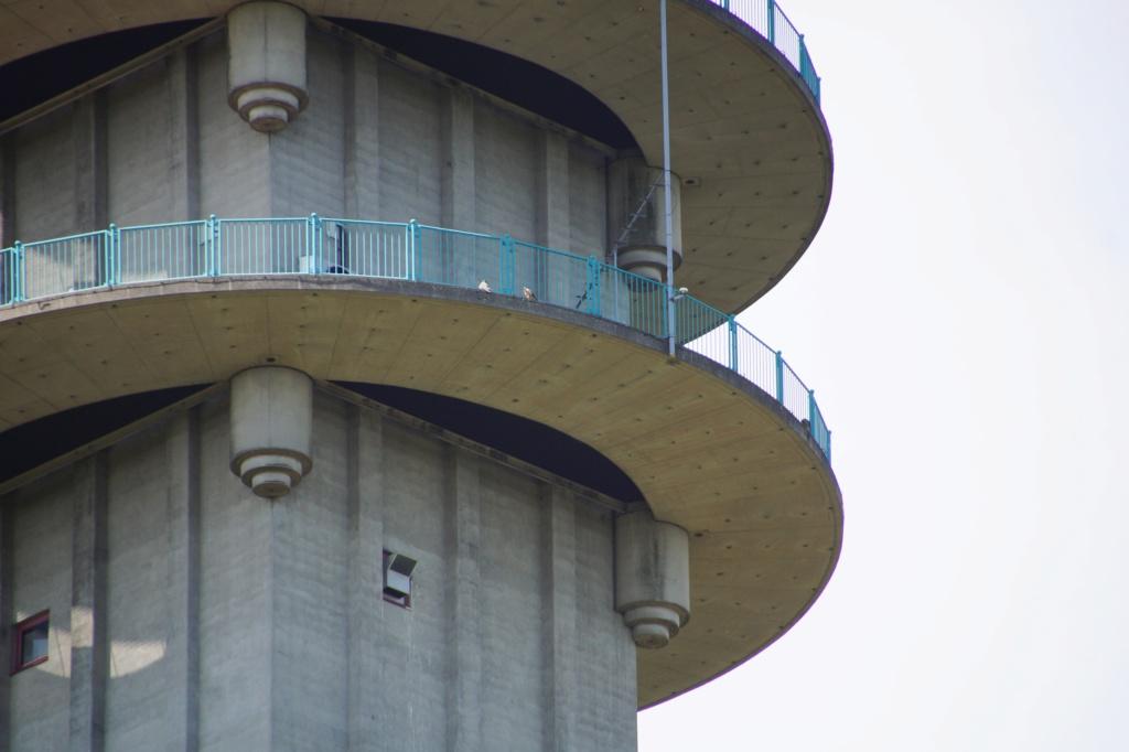 Rond om de toren - Pagina 6 02619
