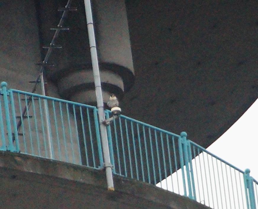 Rondom de toren 0501m_11