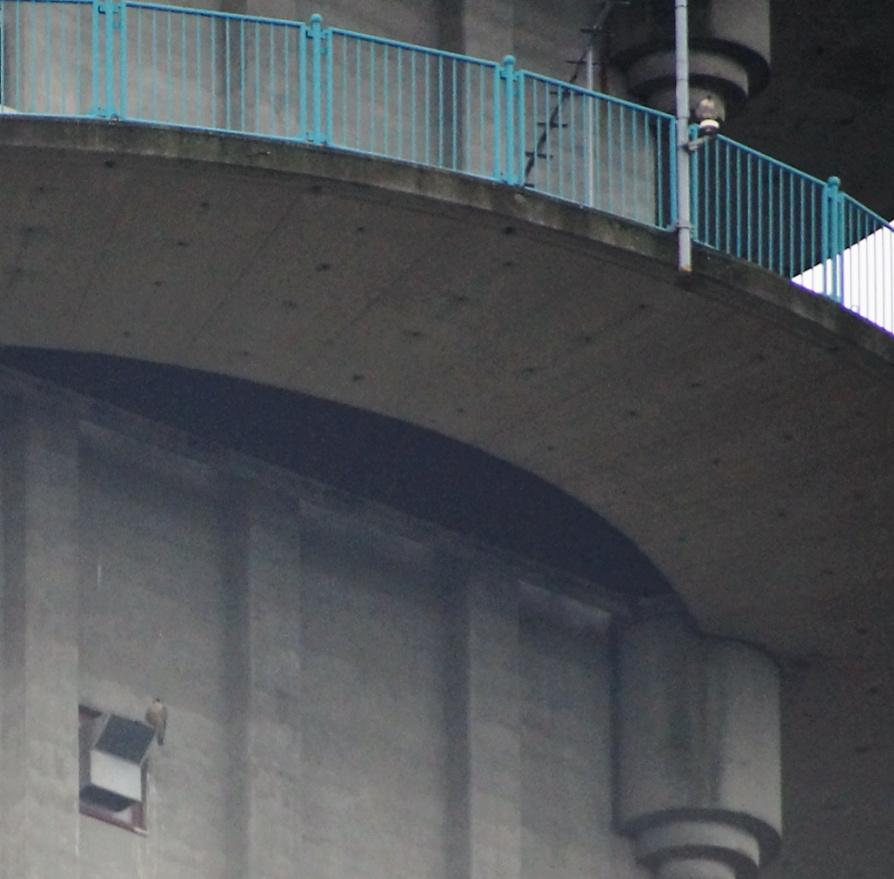 Rondom de toren 0501m_12