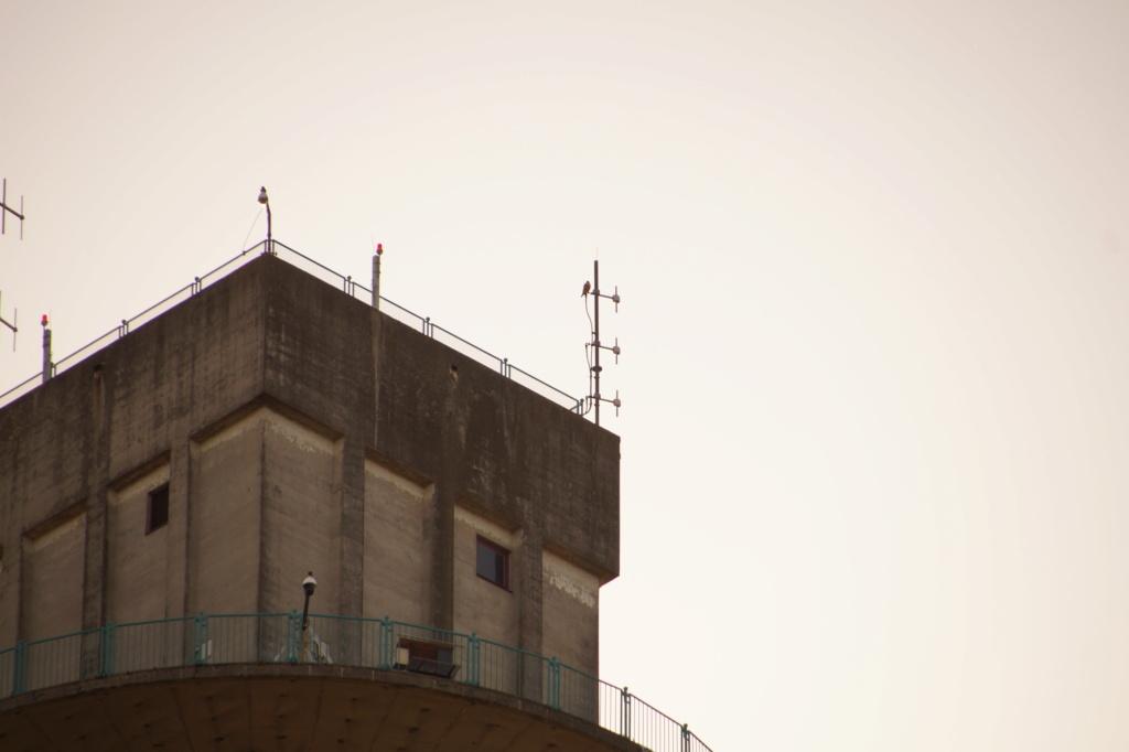 Rond om de toren - Pagina 5 05614