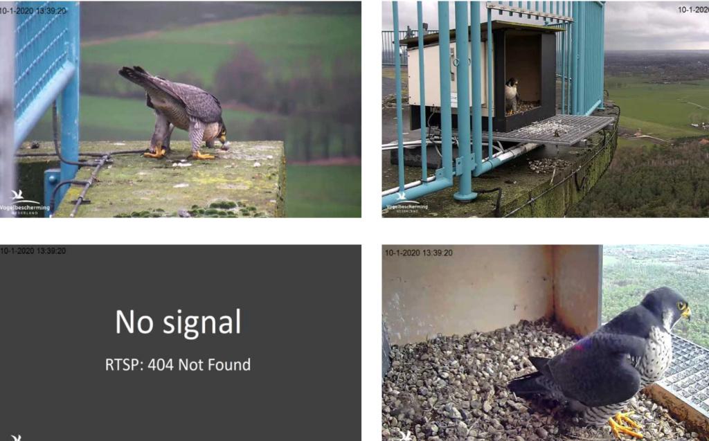 Afbeeldingen De Mortel 2020 deel 1. Vanaf 6-01-2020 - Pagina 2 1001mm10