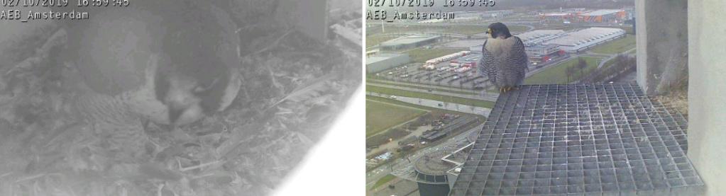 Amsterdam AEB. V. 2FC (Bochum-Wiemelhausen 2014) ~ M. LL (A'dam Hemweg 2014) - Pagina 9 102aeb15