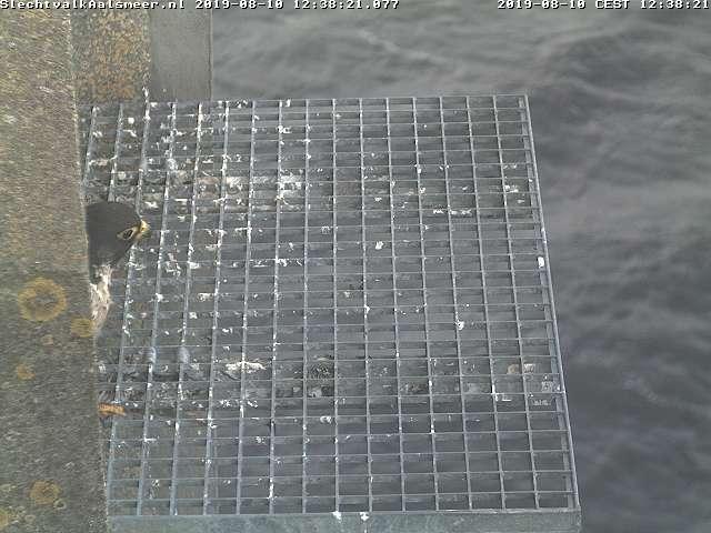 Aalsmeer/Watertoren. Youngster en Sidonia - Pagina 8 108aa210