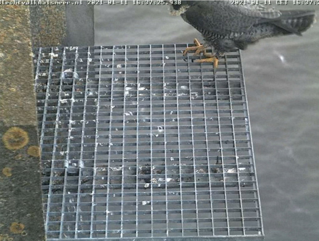 Aalsmeer/Watertoren. Youngster en Sidonia - Pagina 2 111aa310