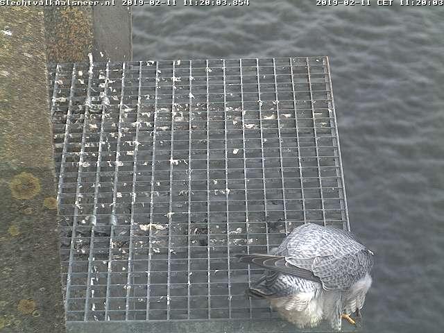 Aalsmeer/Watertoren. Youngster en Sidonia - Pagina 2 112aa110