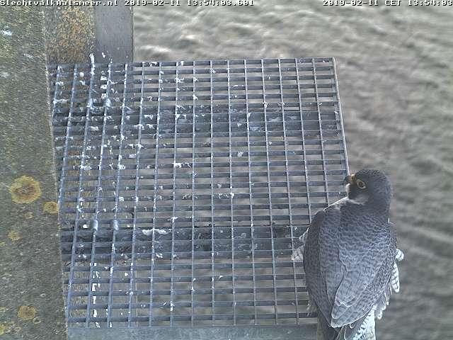 Aalsmeer/Watertoren. Youngster en Sidonia - Pagina 2 112aam11