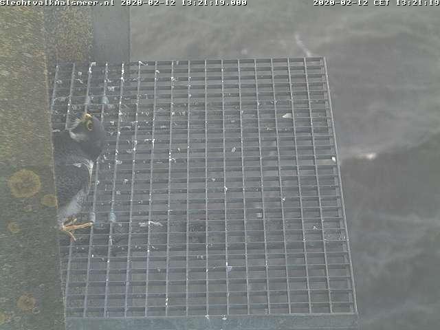 Aalsmeer/Watertoren. Youngster en Sidonia - Pagina 8 122aa111