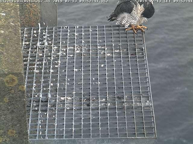 Aalsmeer/Watertoren. Youngster en Sidonia - Pagina 2 132aa10