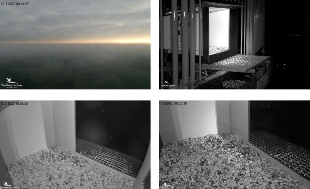 Afbeeldingen De Mortel 2020 deel 1. Vanaf 6-01-2020 - Pagina 20 132m10