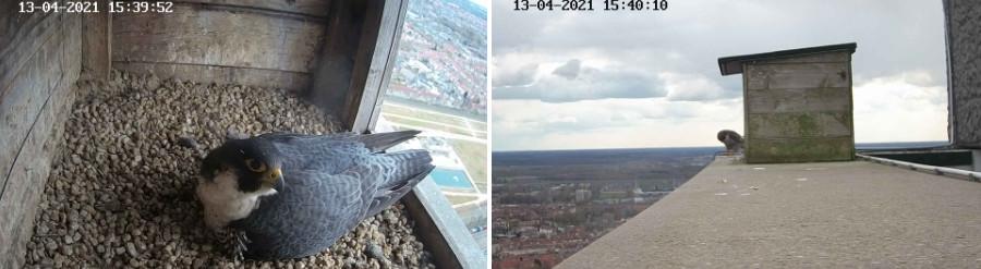 Tilburg/Westpointtoren - Pagina 7 134t10