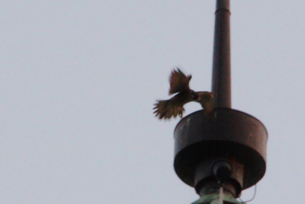 Aalsmeer/Watertoren. Youngster en Sidonia - Pagina 17 13610