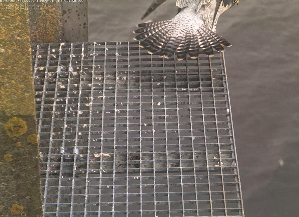 Aalsmeer/Watertoren. Youngster en Sidonia - Pagina 5 141aa110