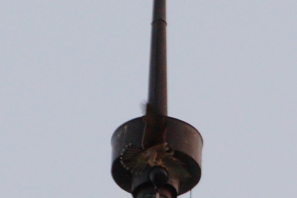 Aalsmeer/Watertoren. Youngster en Sidonia - Pagina 17 14211