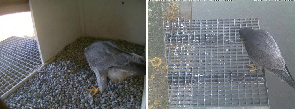 Aalsmeer/Watertoren. Youngster en Sidonia - Pagina 2 142aam16