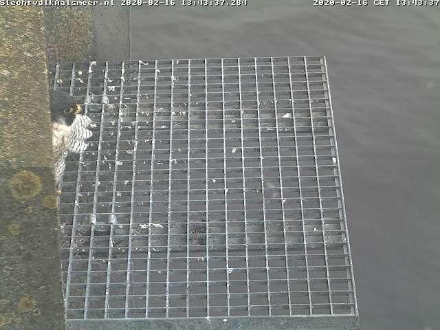 Aalsmeer/Watertoren. Youngster en Sidonia - Pagina 9 162aa110