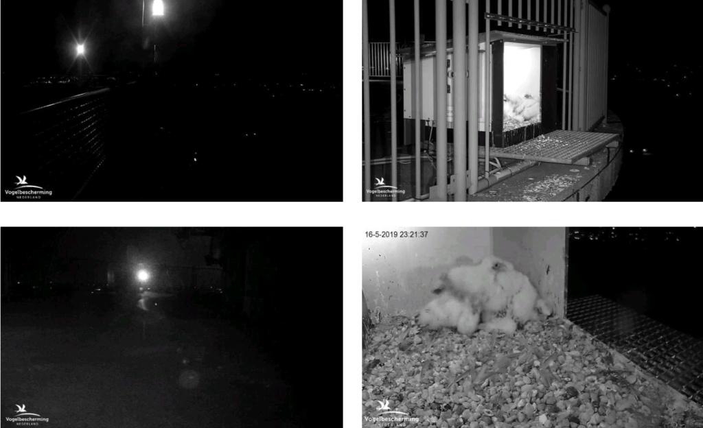afbeeldingen/ campics De Mortel 2019 deel 4 - Pagina 3 16523210