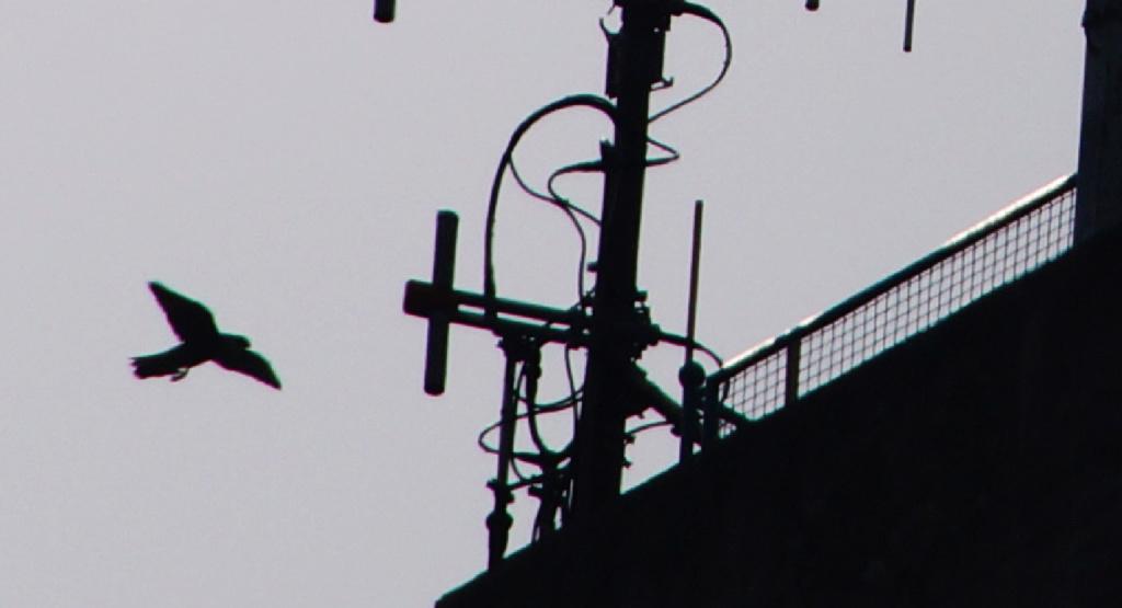 Rond om de toren - Pagina 8 167_ju11
