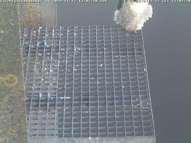 Aalsmeer/Watertoren. Youngster en Sidonia 1711aa10