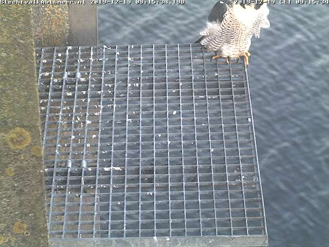 Aalsmeer/Watertoren. Youngster en Sidonia - Pagina 3 1912aa10