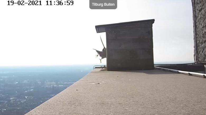 Tilburg/Westpointtoren - Pagina 4 192t111