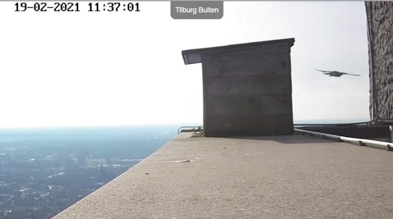 Tilburg/Westpointtoren - Pagina 4 192t210