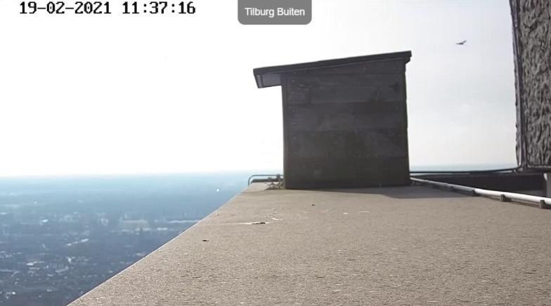 Tilburg/Westpointtoren - Pagina 4 192t410