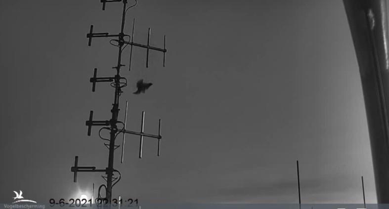campics vanaf takkelingen © VWGGemert/VBN - Pagina 20 2021-095