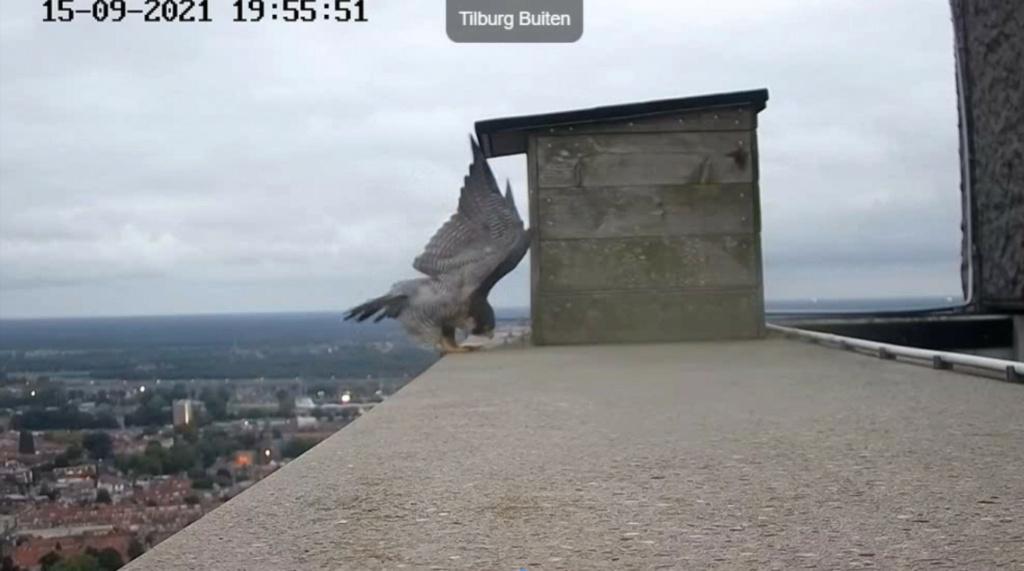 Tilburg/Westpointtoren - Pagina 14 2021-111