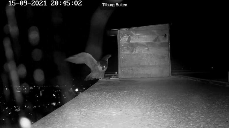 Tilburg/Westpointtoren - Pagina 14 2021-115