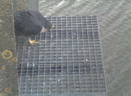 Aalsmeer/Watertoren. Youngster en Sidonia - Pagina 6 202aa110