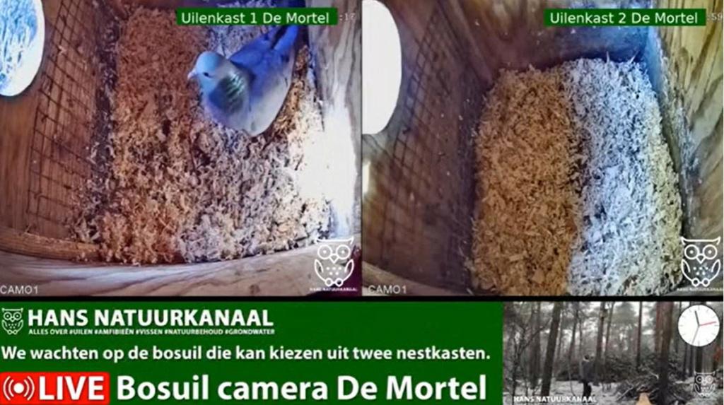 Bosuil de Mortel 2021 - Pagina 3 202bom10