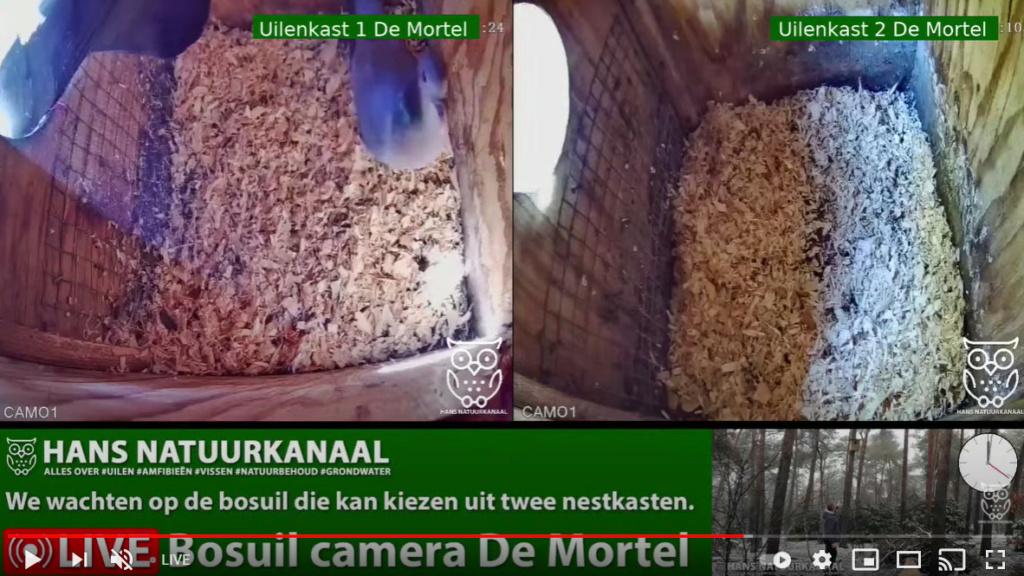 Bosuil de Mortel 2021 - Pagina 3 202bom12