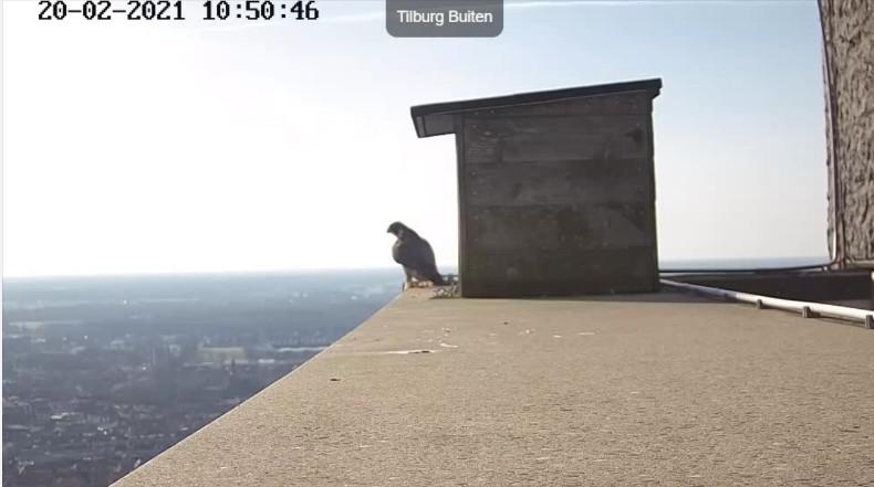 Tilburg/Westpointtoren - Pagina 5 202t10
