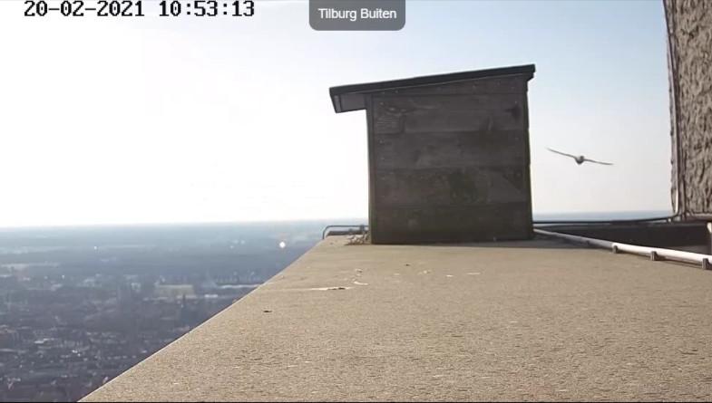 Tilburg/Westpointtoren - Pagina 5 202t210