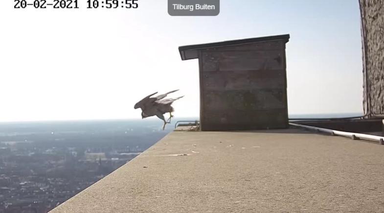 Tilburg/Westpointtoren - Pagina 5 202t510