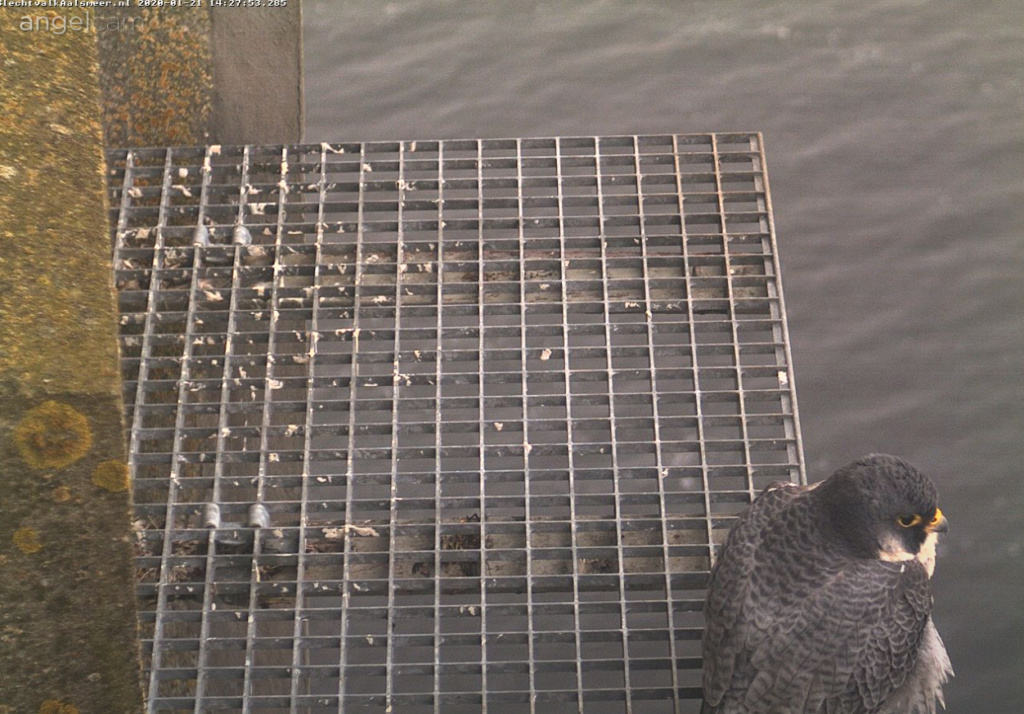Aalsmeer/Watertoren. Youngster en Sidonia - Pagina 5 211aa110