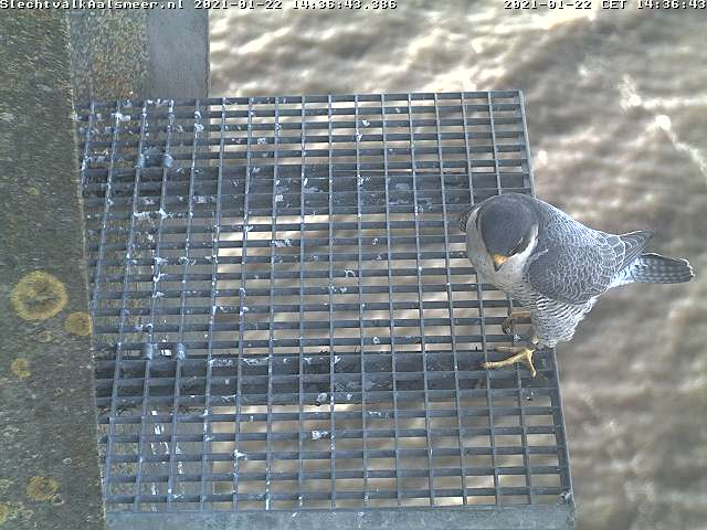 Aalsmeer/Watertoren. Youngster en Sidonia - Pagina 3 221aa11