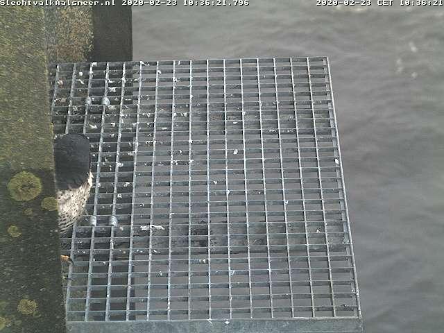 Aalsmeer/Watertoren. Youngster en Sidonia - Pagina 9 232aa110