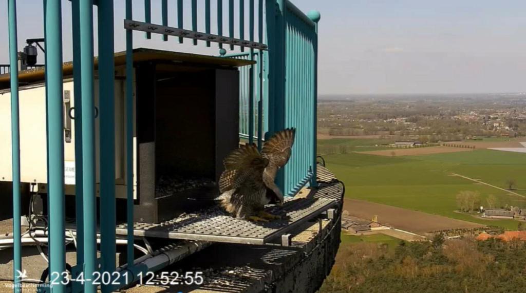 campics vanaf pip/ hatch 1e kuiken © VWGGemert/VBN - Pagina 4 23412511