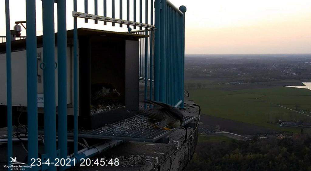 campics vanaf pip/ hatch 1e kuiken © VWGGemert/VBN - Pagina 5 23420417